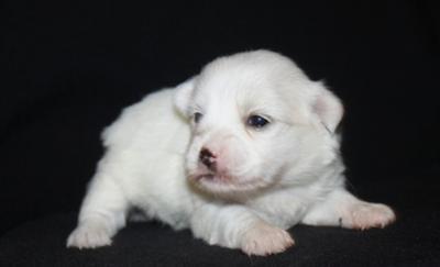 Zooey @ 2.5 weeks