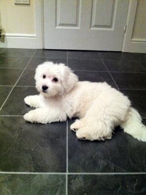 Poppy's puppy cut