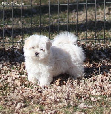 Romeo at 8 weeks