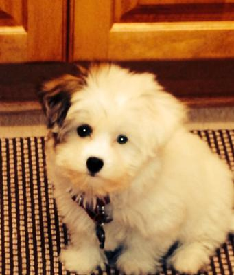 Rudy Best Coton Ever