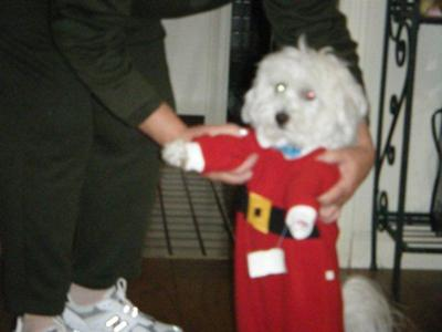 HAPPY HOLIDAYS FROM SANTA TUFFY COTON