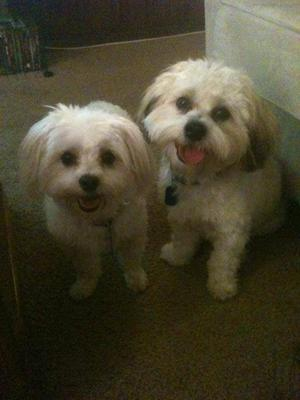 Spanky & Gleason (this is what Happy looks like)