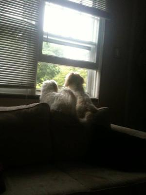 barking out the window - Spanky & Gleason