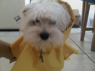 Grandpa got Spanky a Raincoat!