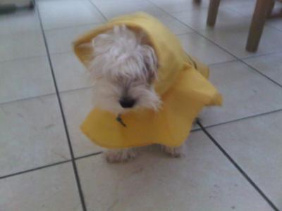 Cute pic in his raincoat.