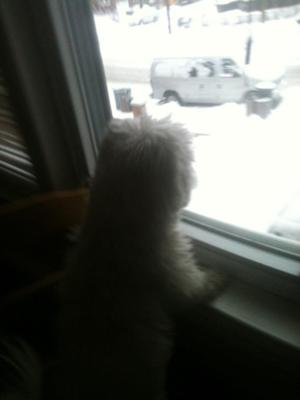 Spanky's first snowfall... Mommy, can we go play in it?