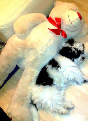Sleeping soundly with his favourite bear