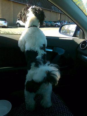 Waiting in the car for daddy to return