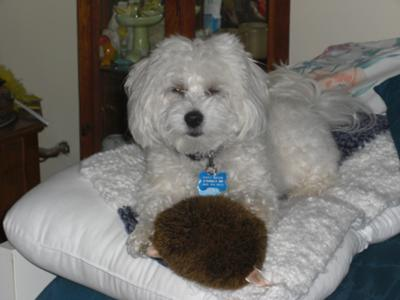 Tuffy with his wife hedgehoghumper