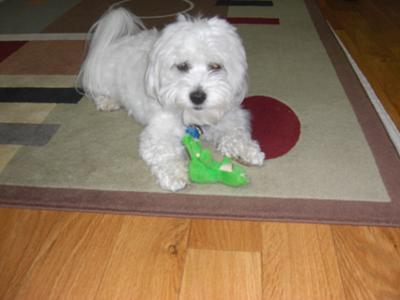 Tuffy wants to play with