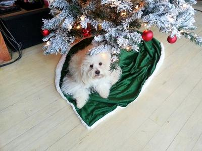 Gabry under the Christmas Tree