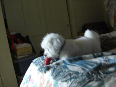 Tuffy & his kong