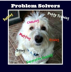 coton de tulear problem solvers
