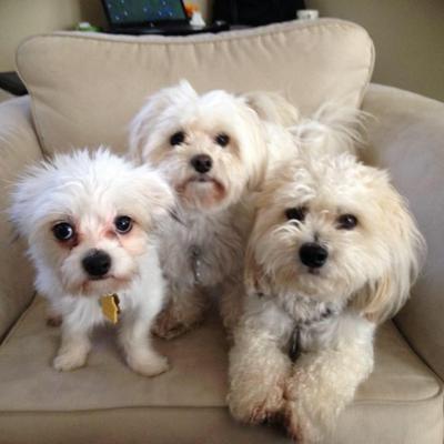 My Three Sons.  Stevie, Spanky & Gleason