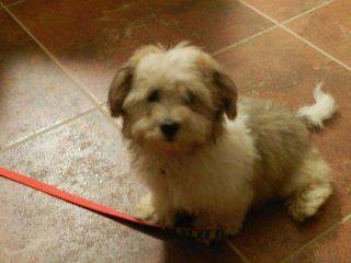 Basil just looking cute