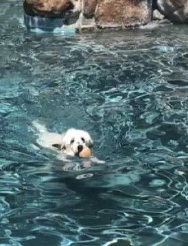 Bruno the swimmer