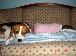 beagle and baby