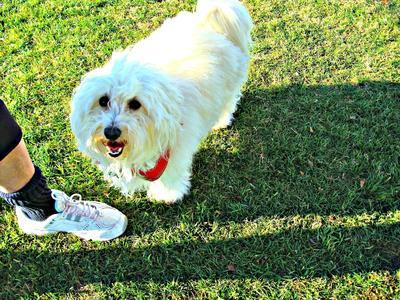 Dogpark Dec. 2011