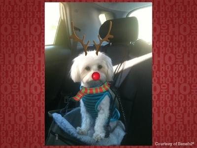 Spanky the red nose Coton