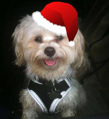 Spanky is happy its Christmas