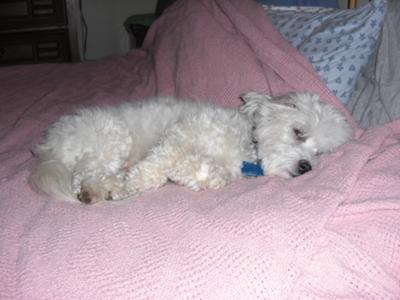 Tuffy was so sick!