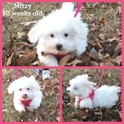 mitzy outside