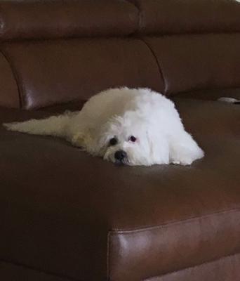 Lulu Victoria on her favorite sofa