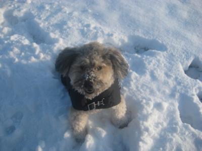 Manju enjoying 1st snow in Chicago