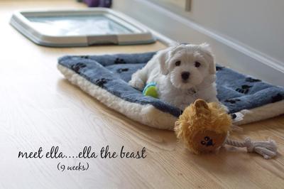 ella the beast