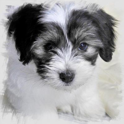 Coton when he was a puppy