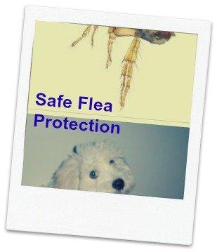natural flea remedies