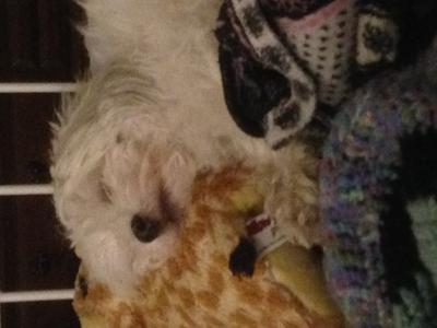 Sweet dreams Tuffy
