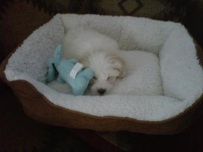 Bailey In His Bed