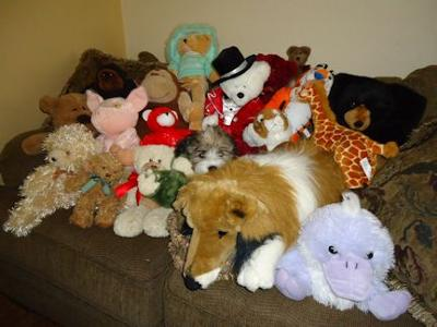 Where's Kyra?  She just celebrated her 3-month birthday with a few of her friends!