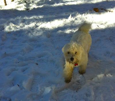 Teddy Bear calls a snowfight[ruff]