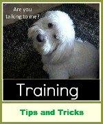 dog training reviews
