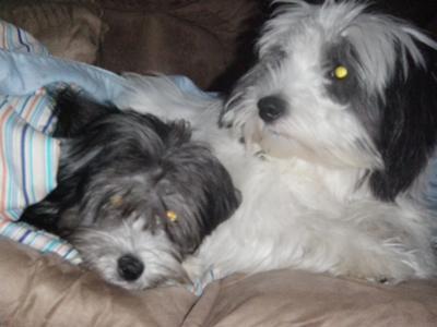 Annie & Gracie - litter sisters