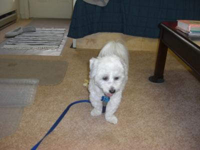 Tuffy's G.I. haircut with short ears